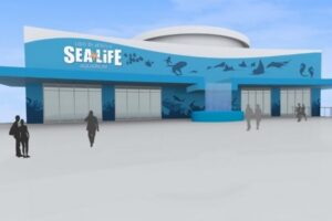 Artwork sea life jesolo